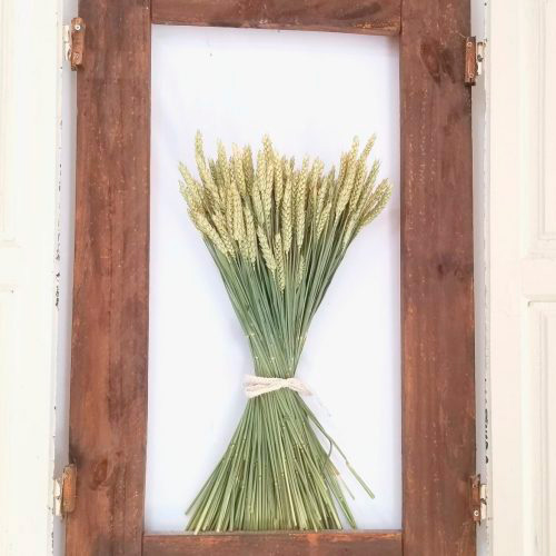 trigo preservado