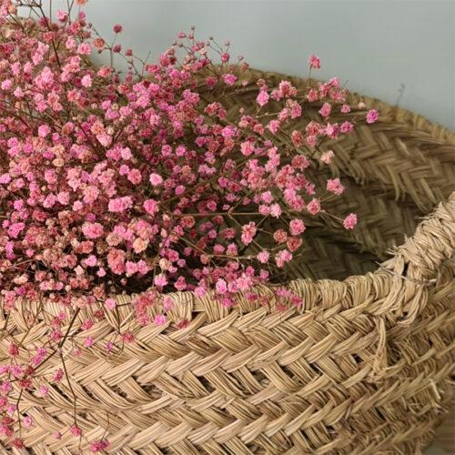 detalle de paniculata rosa