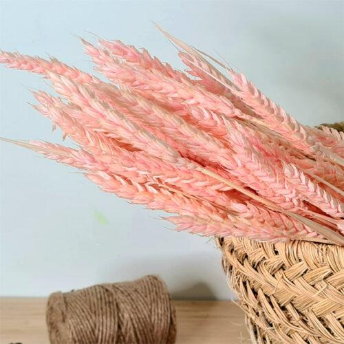 trigo rosa decorativo